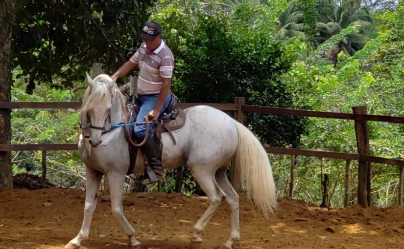Cavalo da raça Manga Larga, de nome Kinho. O primeiro animal do Rancho Divina.
