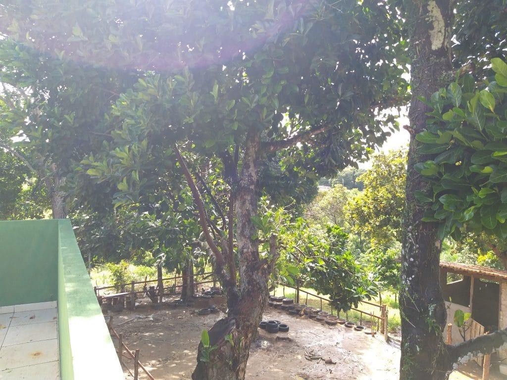 Muita área verde no Haras Divinha
