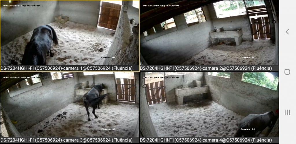 Video monitoramento de uma das baias do Haras Divinha